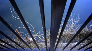 Railings on the Taff